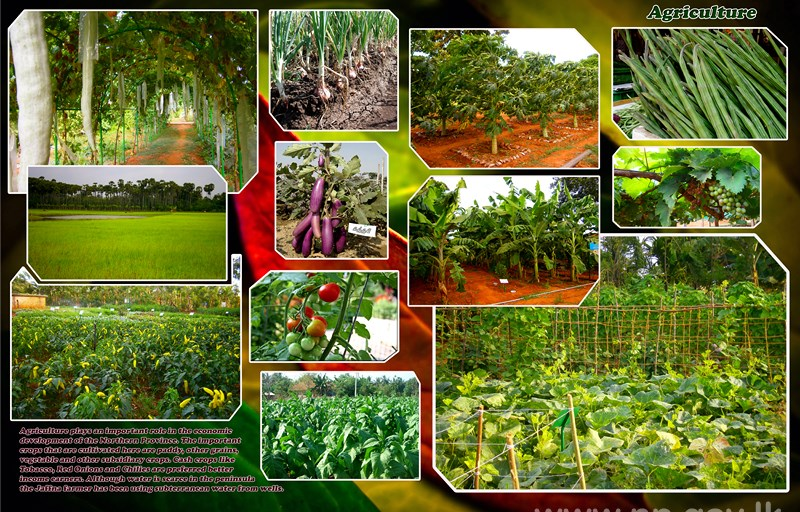 Agriculture_Green_Paradise.jpg